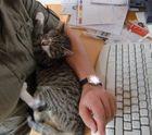 Schmunzelecke - Mieze schläft erschöpft von der Arbeit