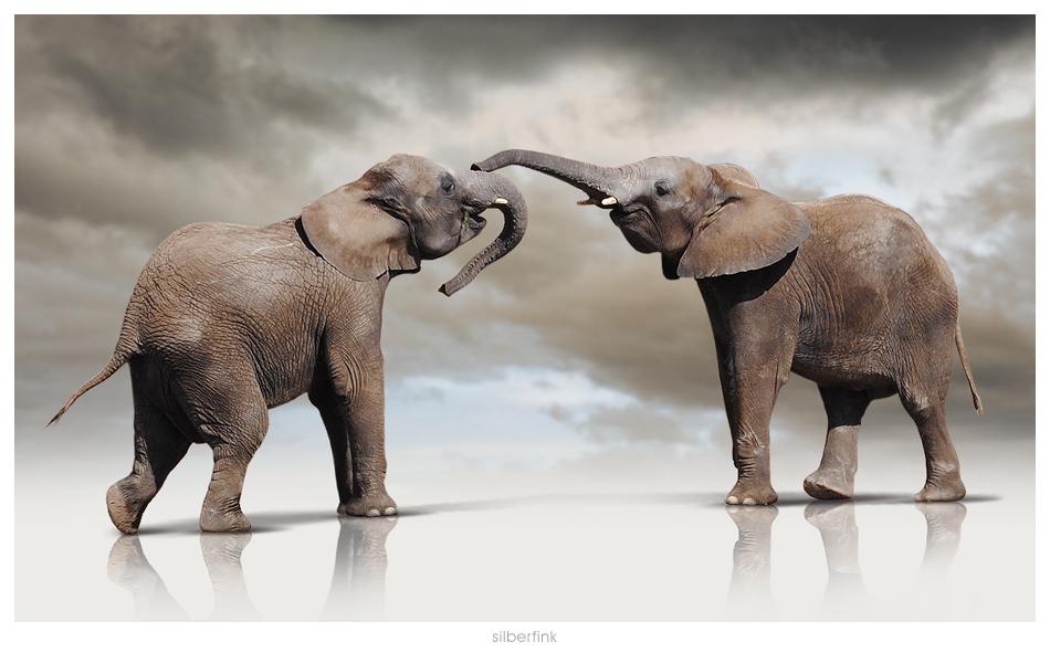 Schmunzelfanten