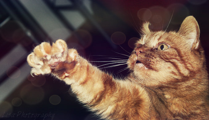 Schmuse Katze
