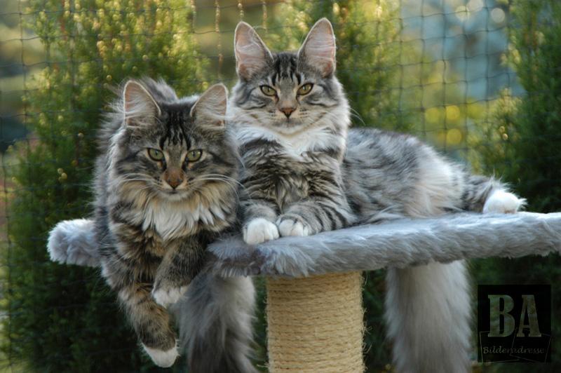 Schmusekatzen