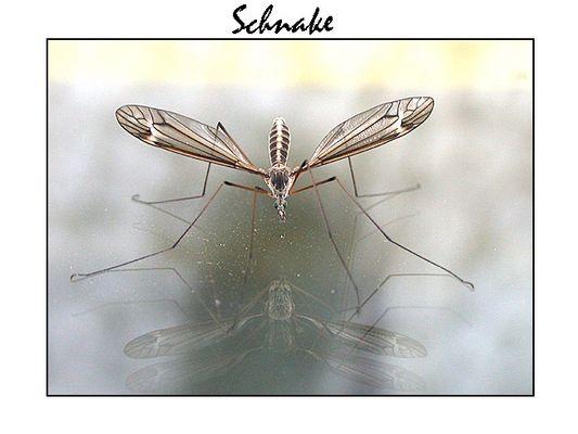 Schnake