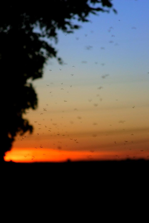 Schnaken im Sonnenuntergang