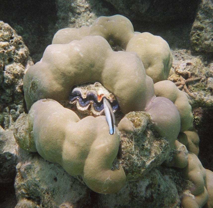 Schnappschauss Unterwasser