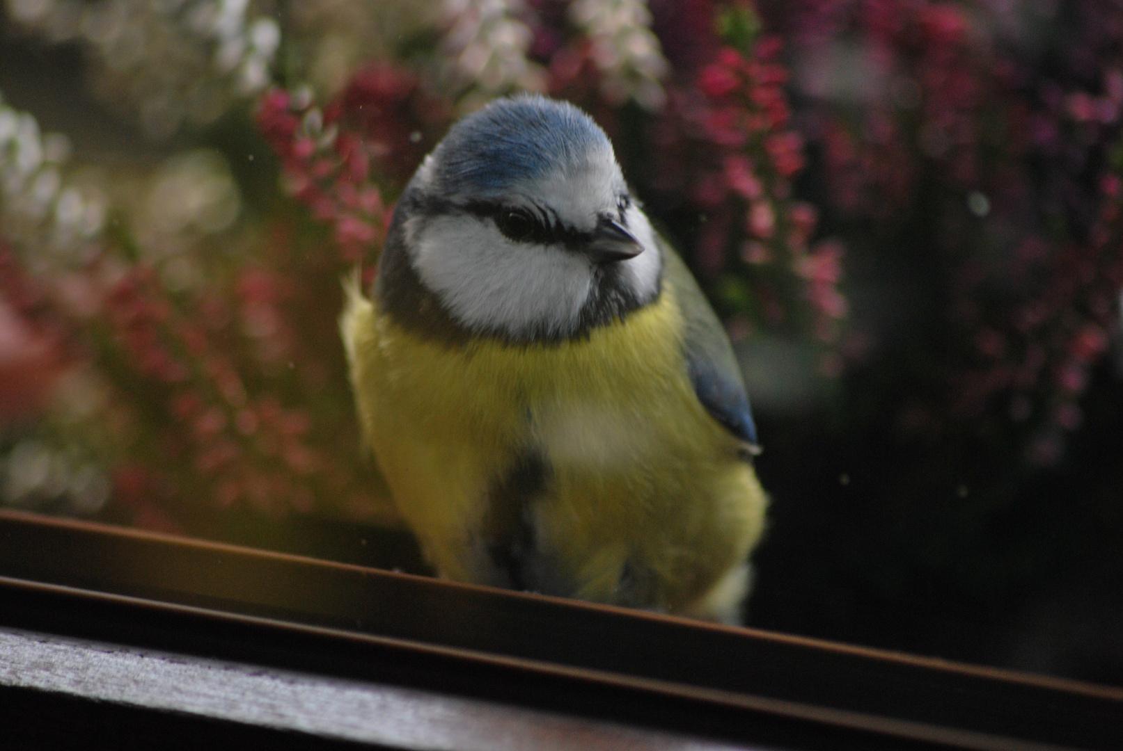 Schnappschuss durch das Küchenfenster