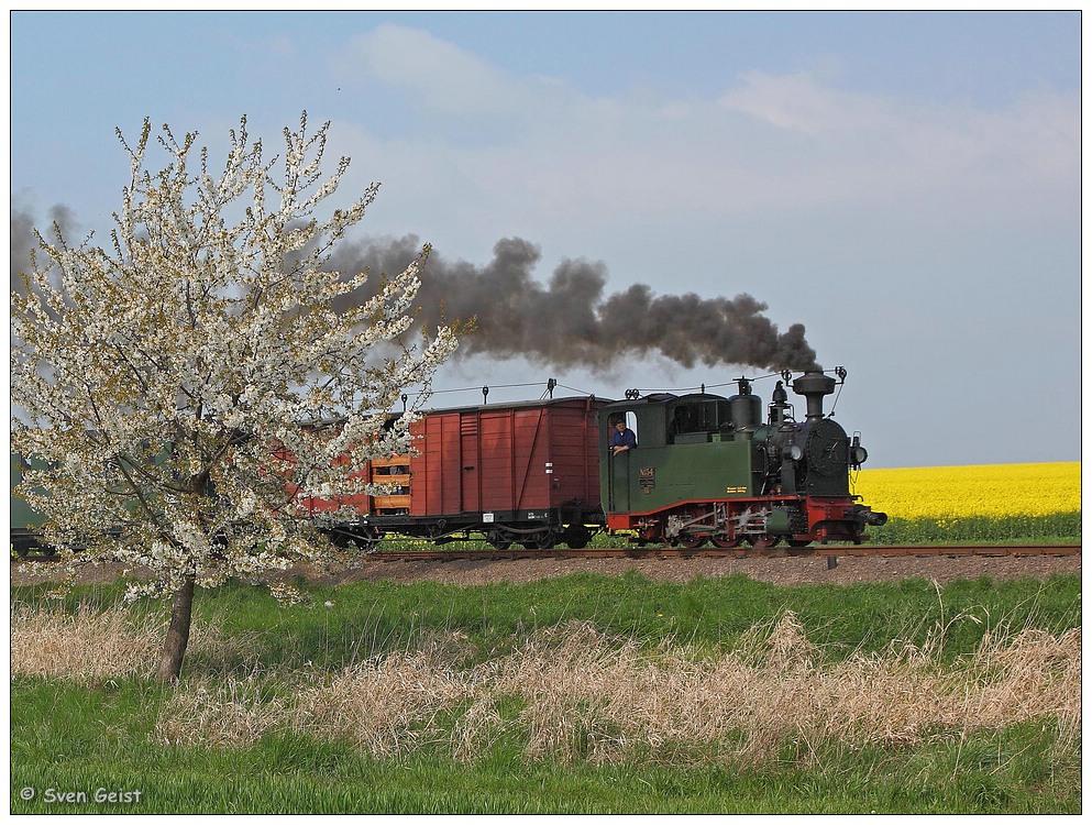 Schnaufende I K 54 am blühenden Kirschbaum