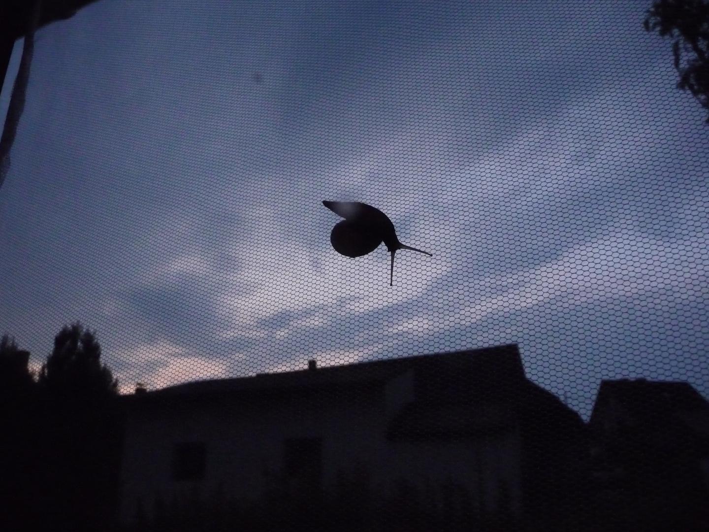 Schnecke am Fliegengitter