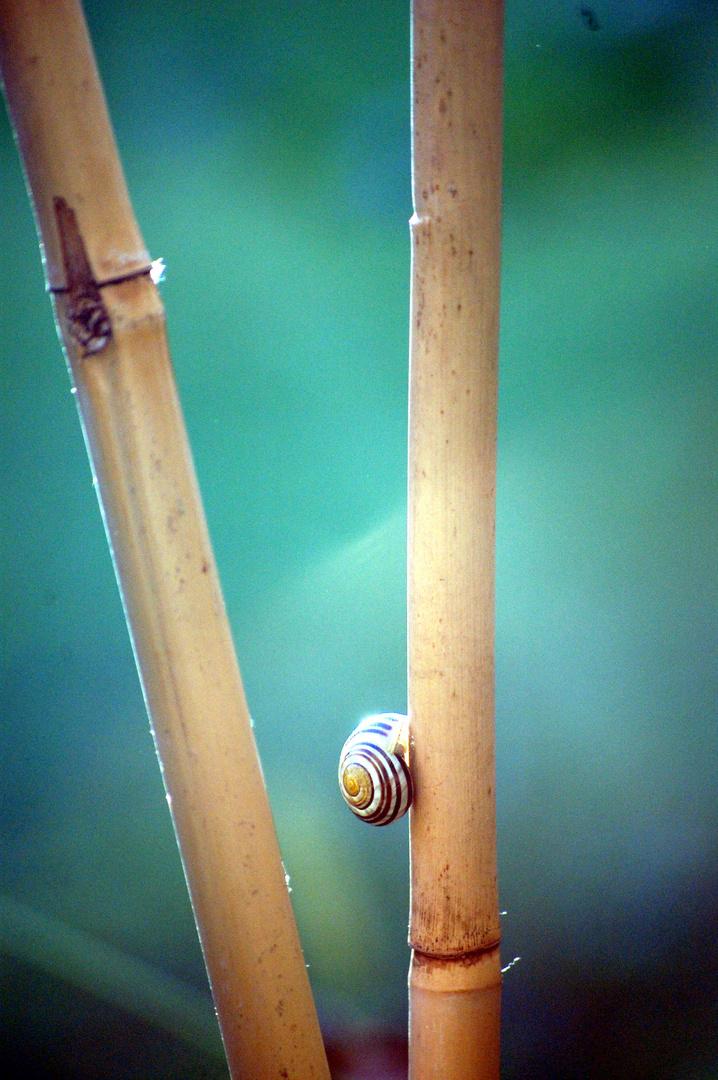 Schnecke an Bambus