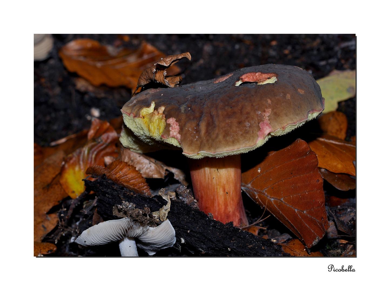Schnecke an Pilz ;-)