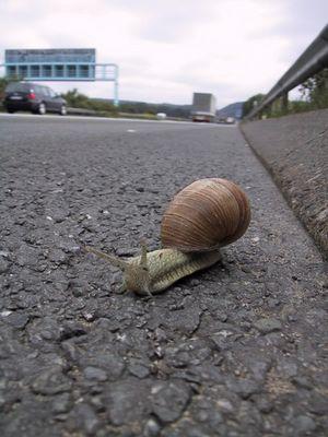 Schnecke auf der Autobahn