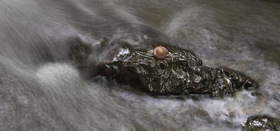 Schnecke auf einsamer Insel!
