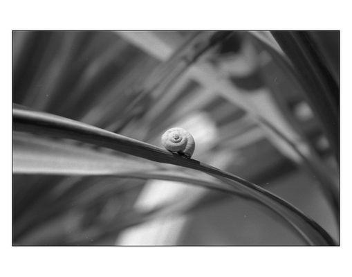 Schnecke auf Palmwedel