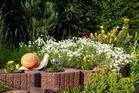Schnecke im Vorgarten