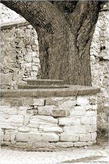 Schnecke mit Baum