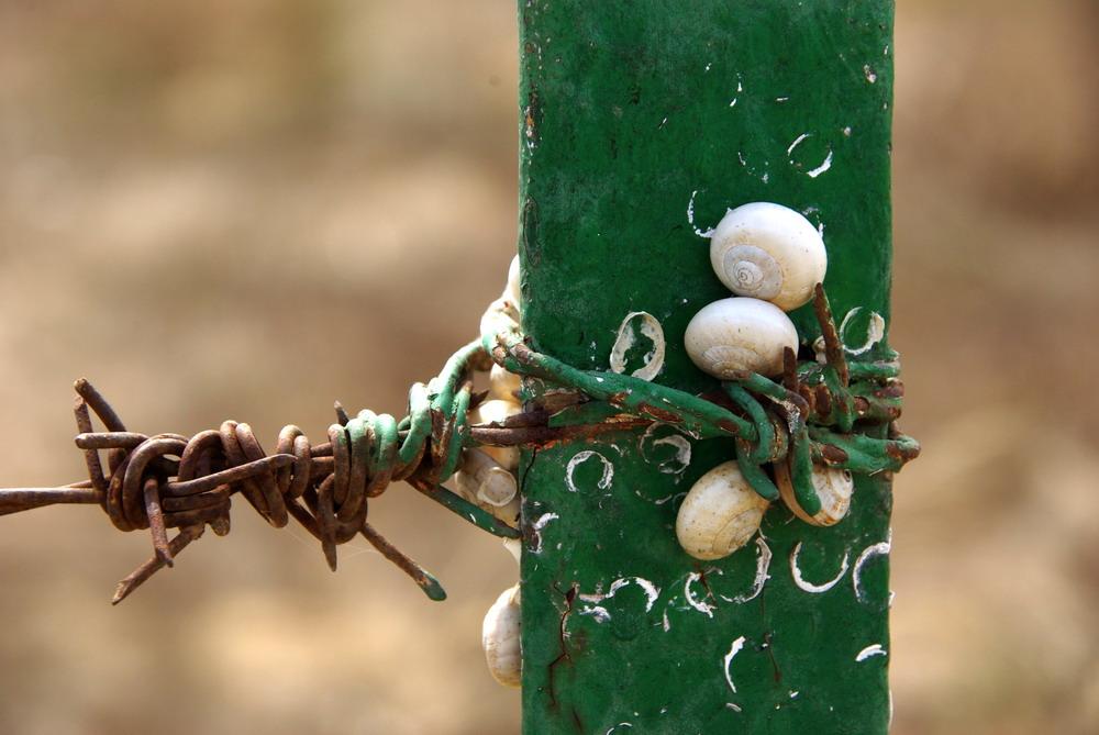 Schnecken-Bondage in Spanien :-)