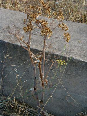 Schneckenbusch