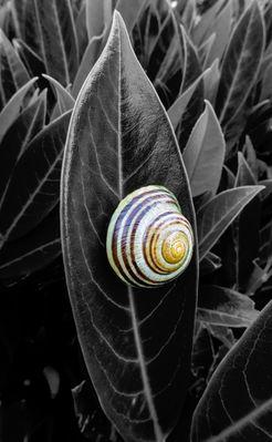 Schneckenlust....Escargots