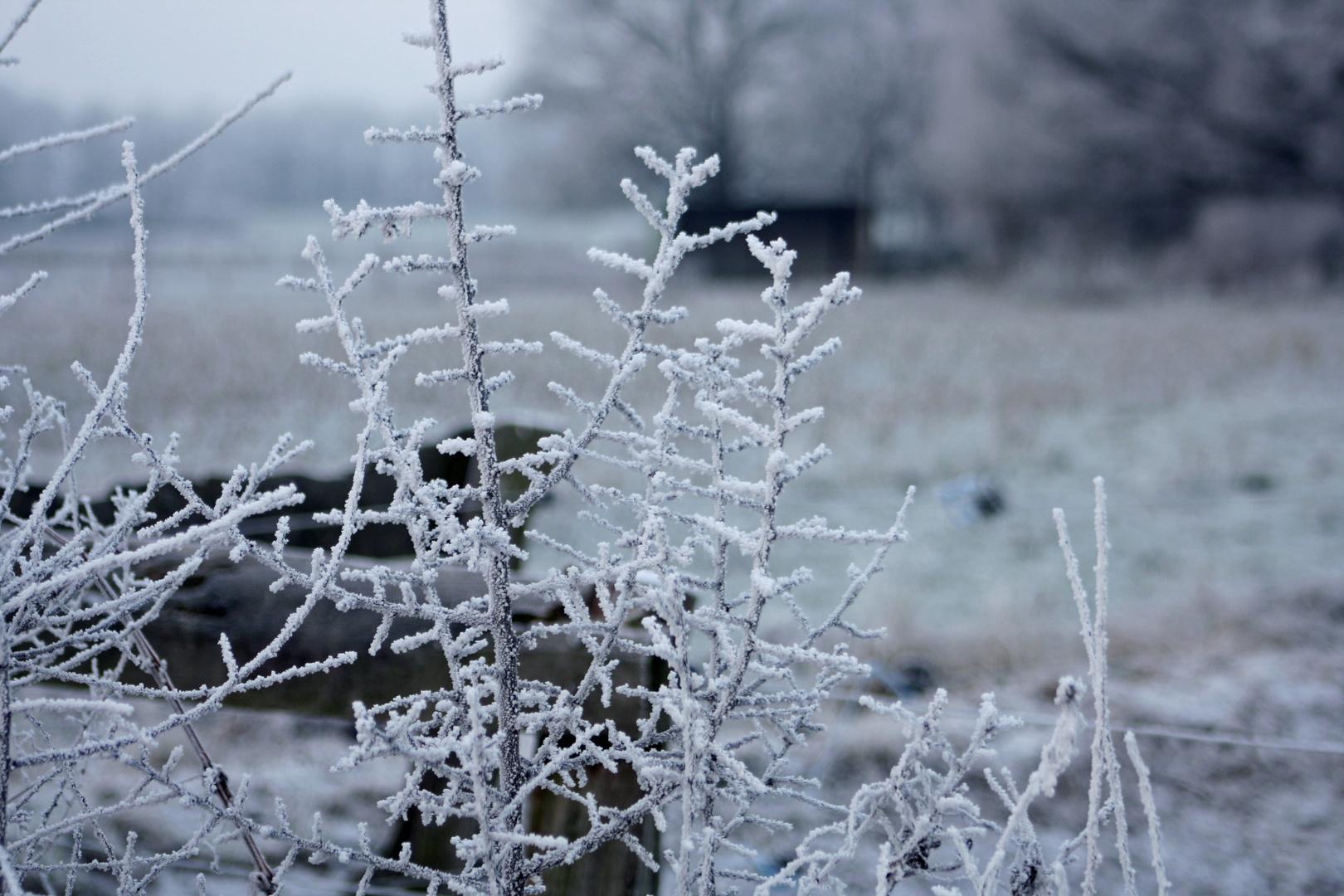 Schnee *-*