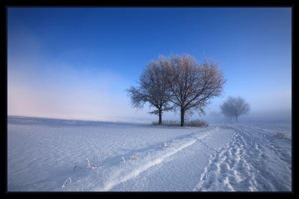 Schnee - Adios