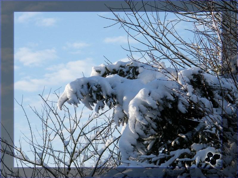 """>> """"Schnee"""" Adler > Wer vermisst ihn?"""
