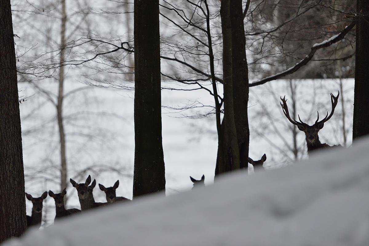 Schnee am Hang und Hirsche dahinter