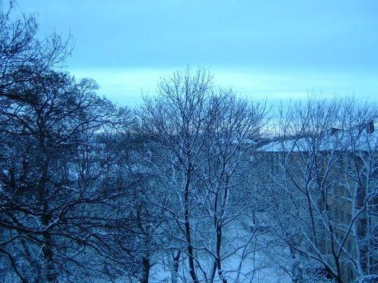 Schnee, Bäume, Morgenblau