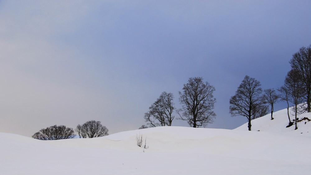 Schnee, Bäume und Himmel