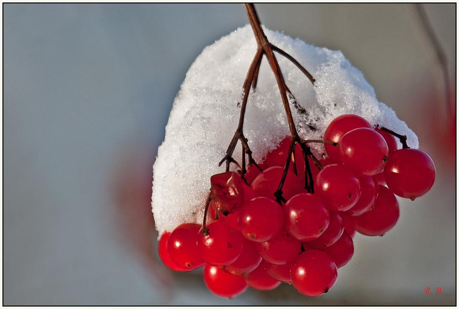 Schnee - Beeren