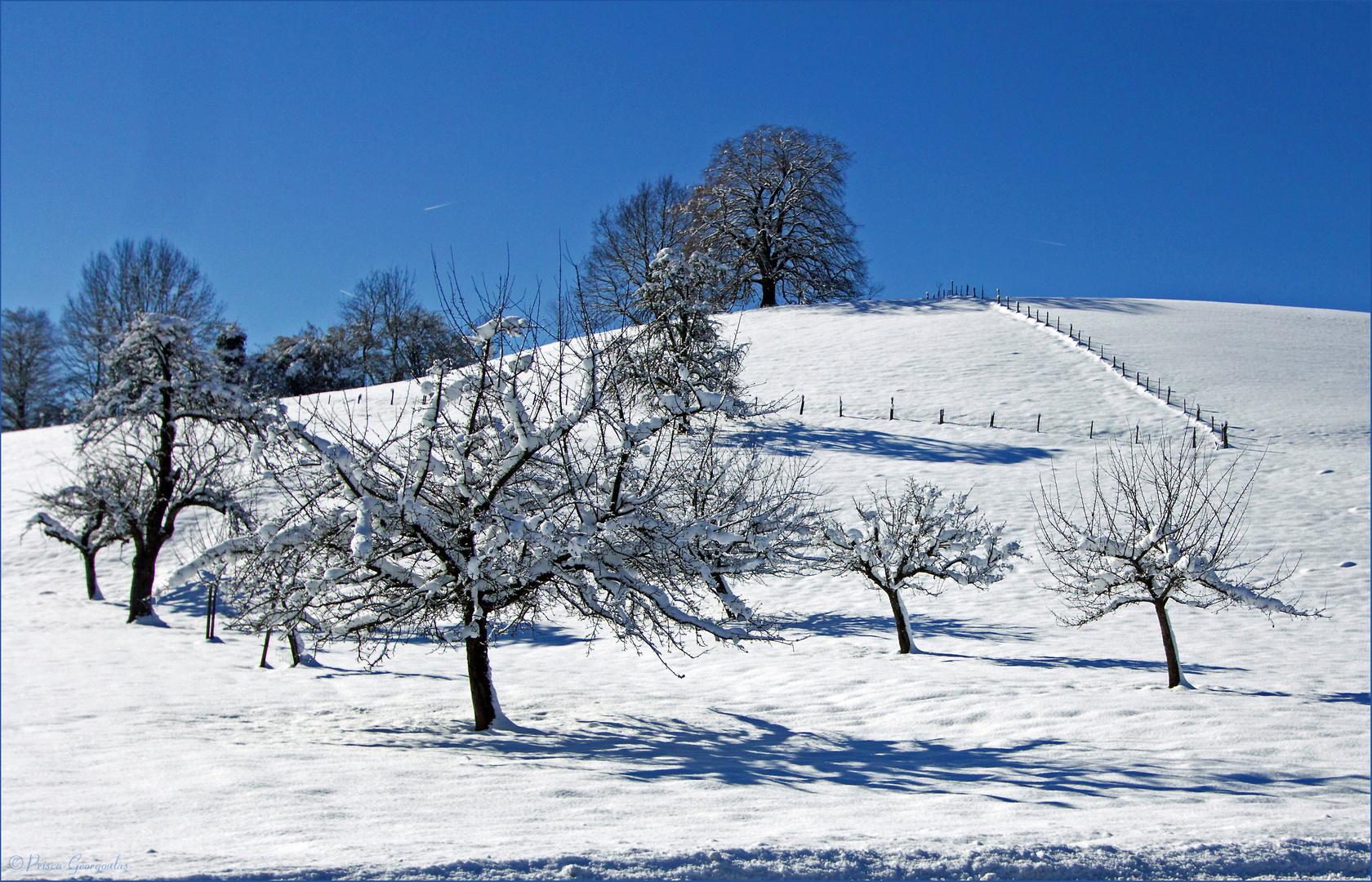 Schnee bis in die Niederungen ....