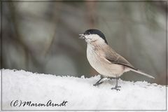 Schnee bis ins Flachland ...