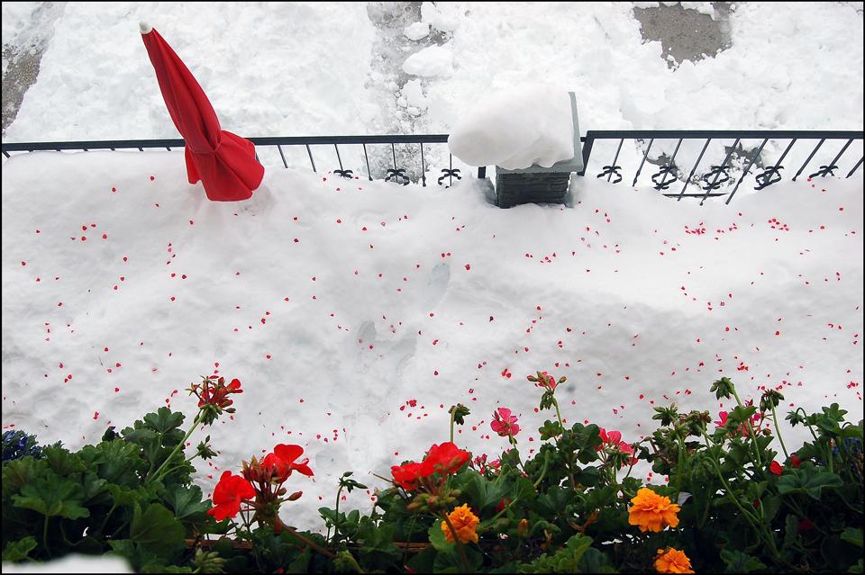 """""""Schnee-Blüten-Teppich"""""""