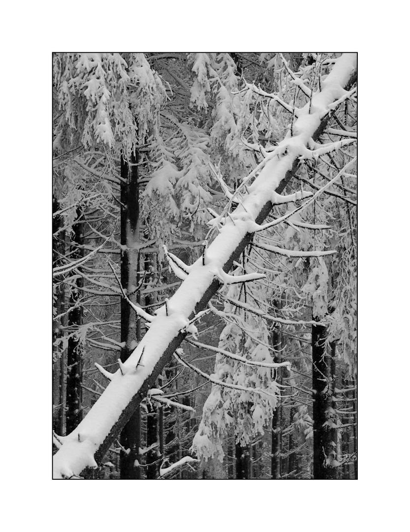 """Schnee-Diagonale"""