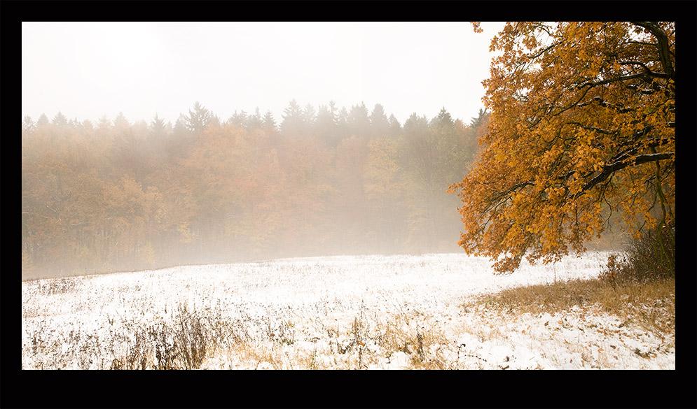 Schnee-Eiche