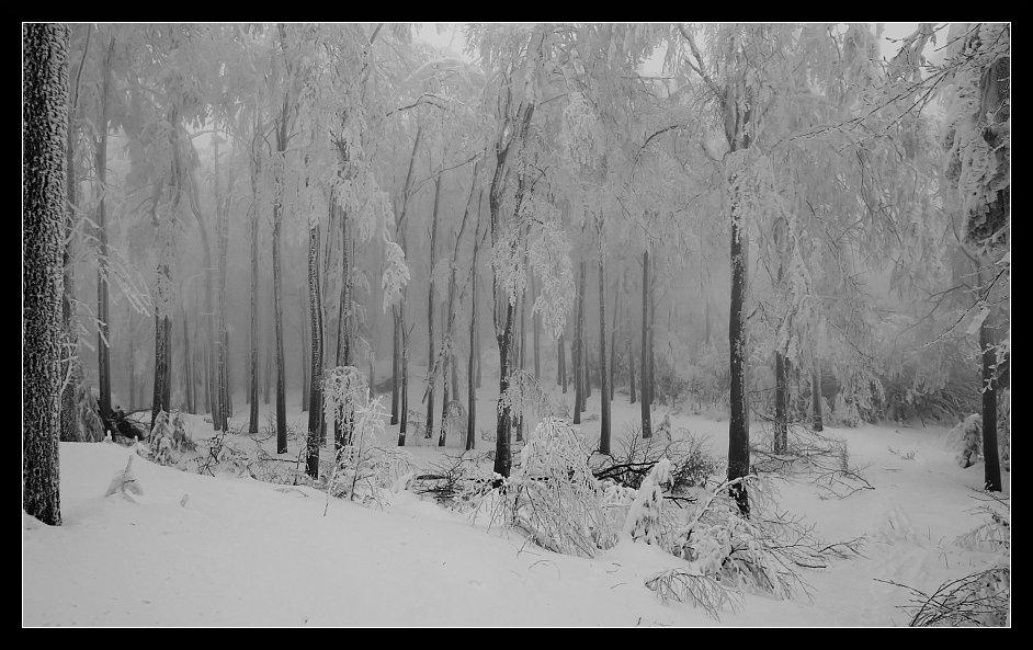 Schnee-Expedition #1