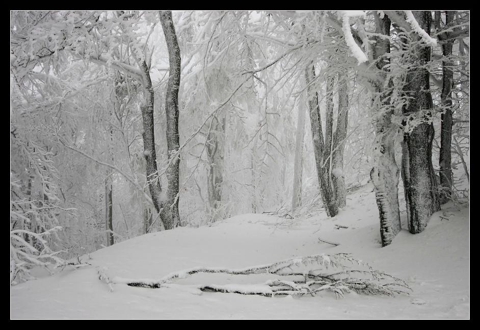 Schnee-Expedition #10