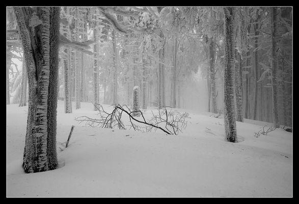 Schnee-Expedition #5