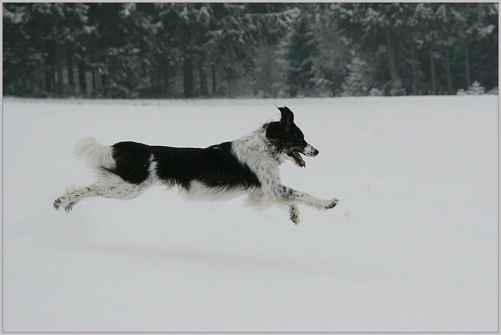 Schnee Flug ...