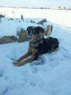 Schnee-Hund
