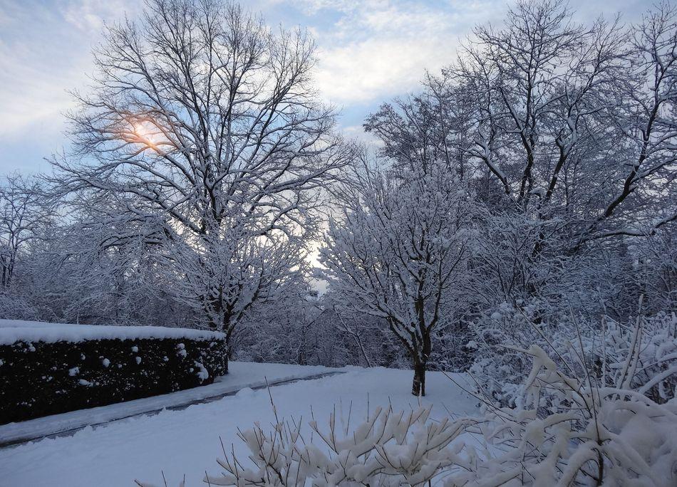 Schnee-Idylle