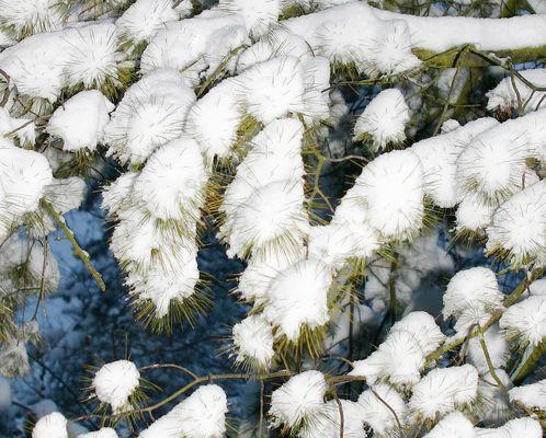 Schnee Igel