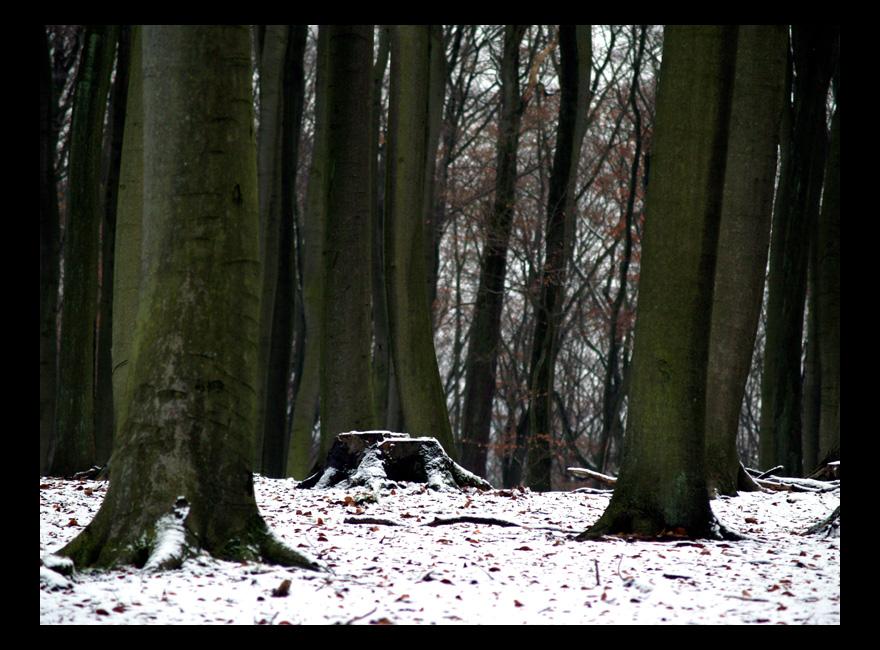 Schnee im Buchenwald