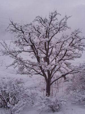 Schnee im Ötztal