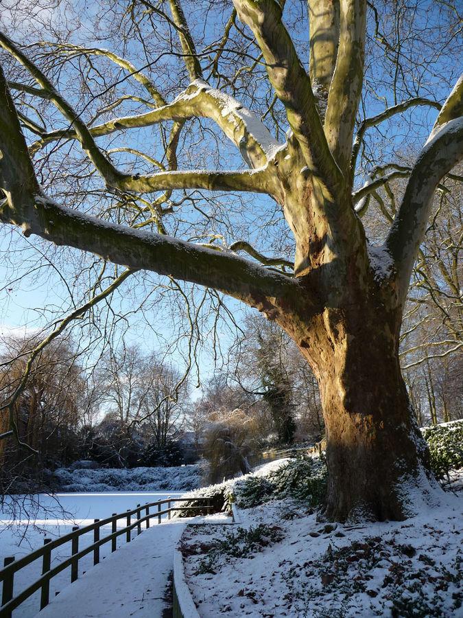 Schnee-Impressionen in Münster
