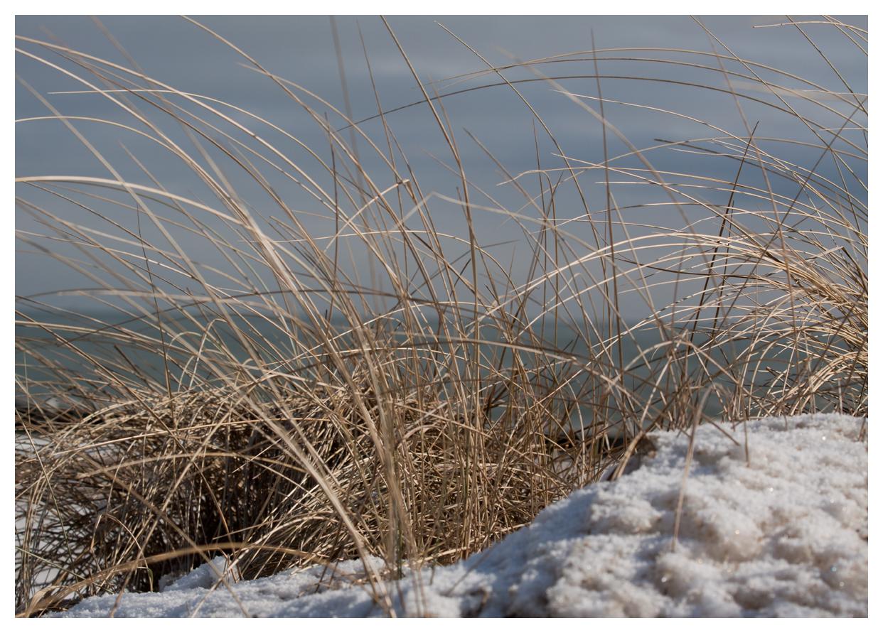 Schnee in den Dühnen
