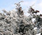 Schnee in HD