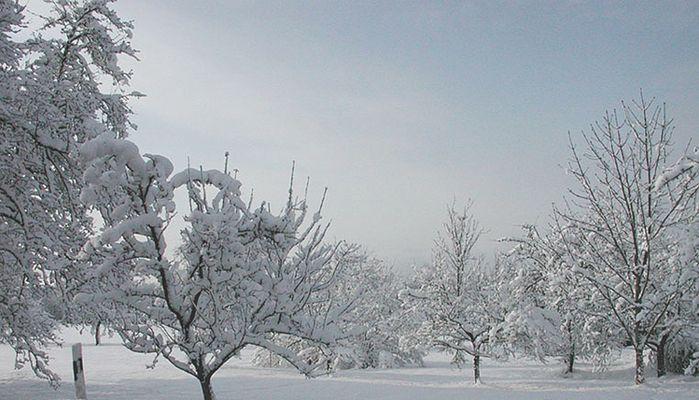 Schnee in Massen