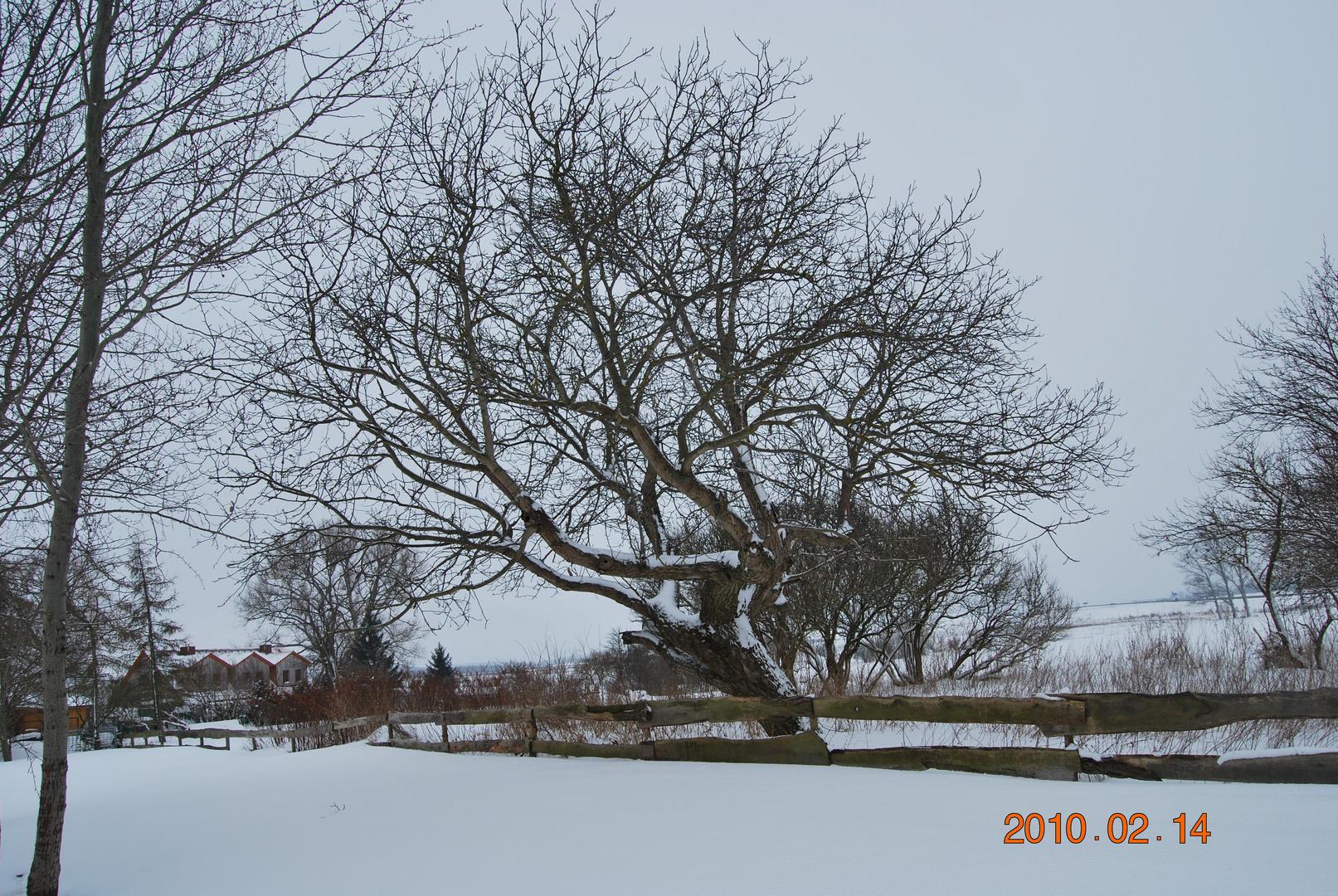 Schnee kam und blieb