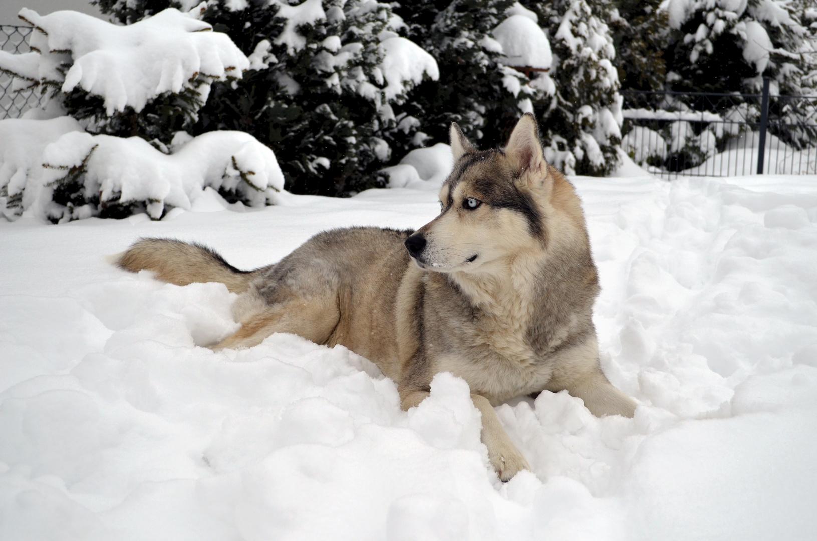 Schnee kann so schön sein...