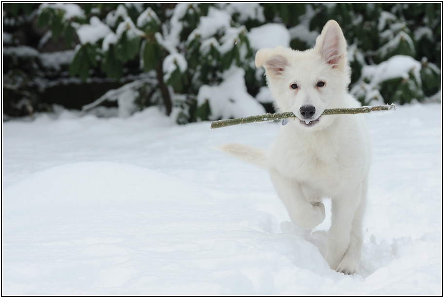 Schnee macht Spaß :-)))