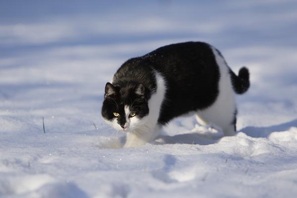 Schnee mit Katze