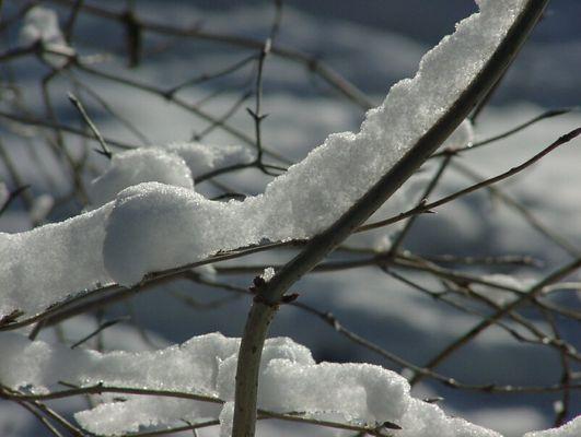 Schnee nah, dick und doch zart